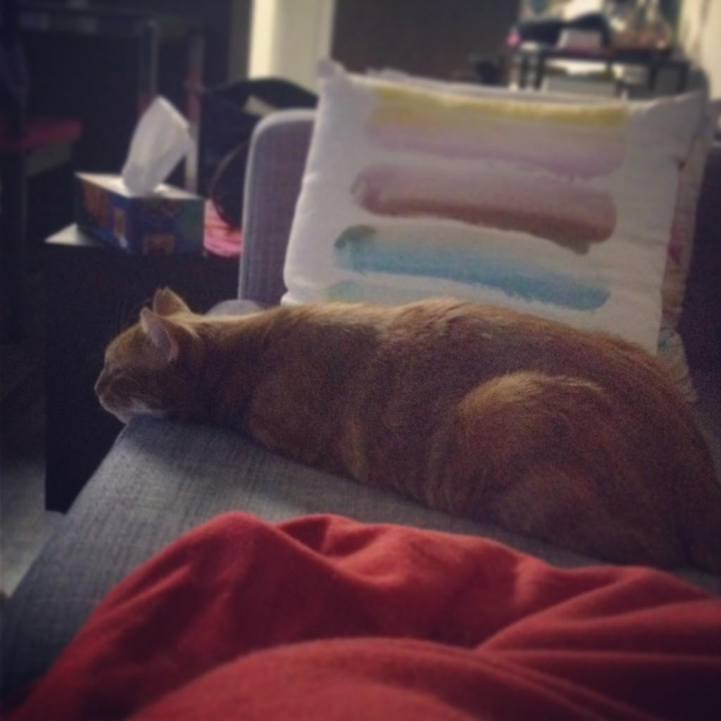 Couch Potato Cat